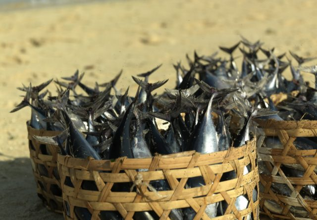 seapodym research fishing